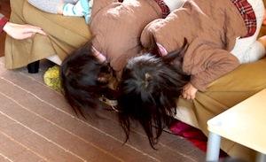 子供たちは薪ストーブよりも猫に興味津々。ソファの下に隠れちゃった?