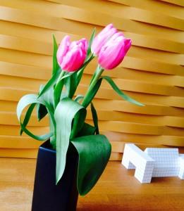 部屋が暖かいので、花弁がすぐに開いてきました。